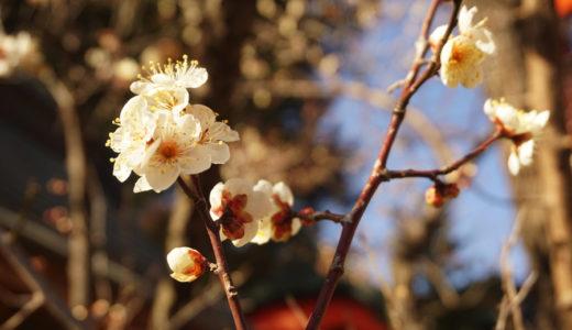 榴岡公園〜榴岡天満宮の梅を見に行ってきた