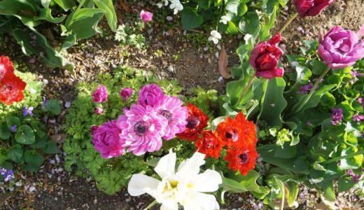 【柴田町】船岡城址公園で花を愛でてきた
