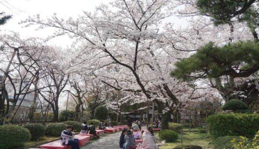 【2019年】若林区 松音寺(しょうおんじ)の桜