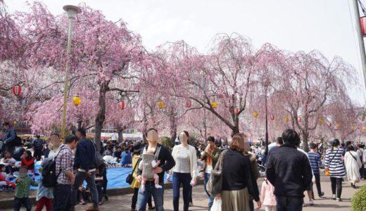 【2019年】榴岡公園(つつじがおかこうえん)で満開の桜を見てきた
