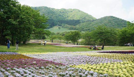 【加美町】色とりどりの花の楽園!やくらいガーデン